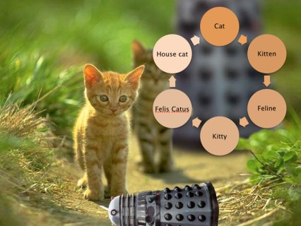 A Synonym Ring of Kitty Terms